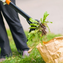 Person working in yard picking up weeds